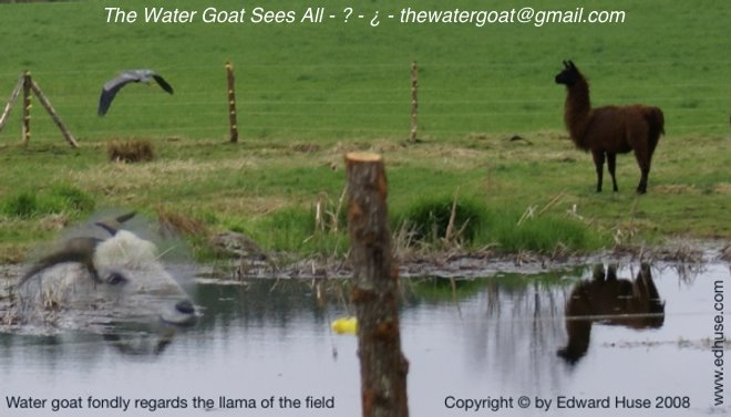 Water goat regards fondly the llama of the field, an adjusted photo Copyright © by Edward Huse 2008