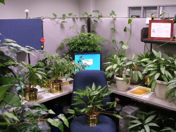 Unique Terrariums Are An Easy Way To Add Some Greenery To Your Desk Experts Agree That Having Plants In The Office Sharpens Mental Focus, Improves Air Quality And
