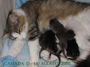 """""""Camada: D, 14/agosto/2007""""."""