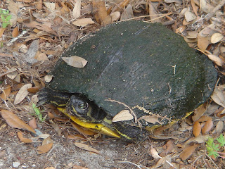 Turtle on land