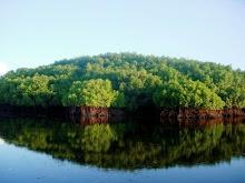 Mangrove of Nusa Penida