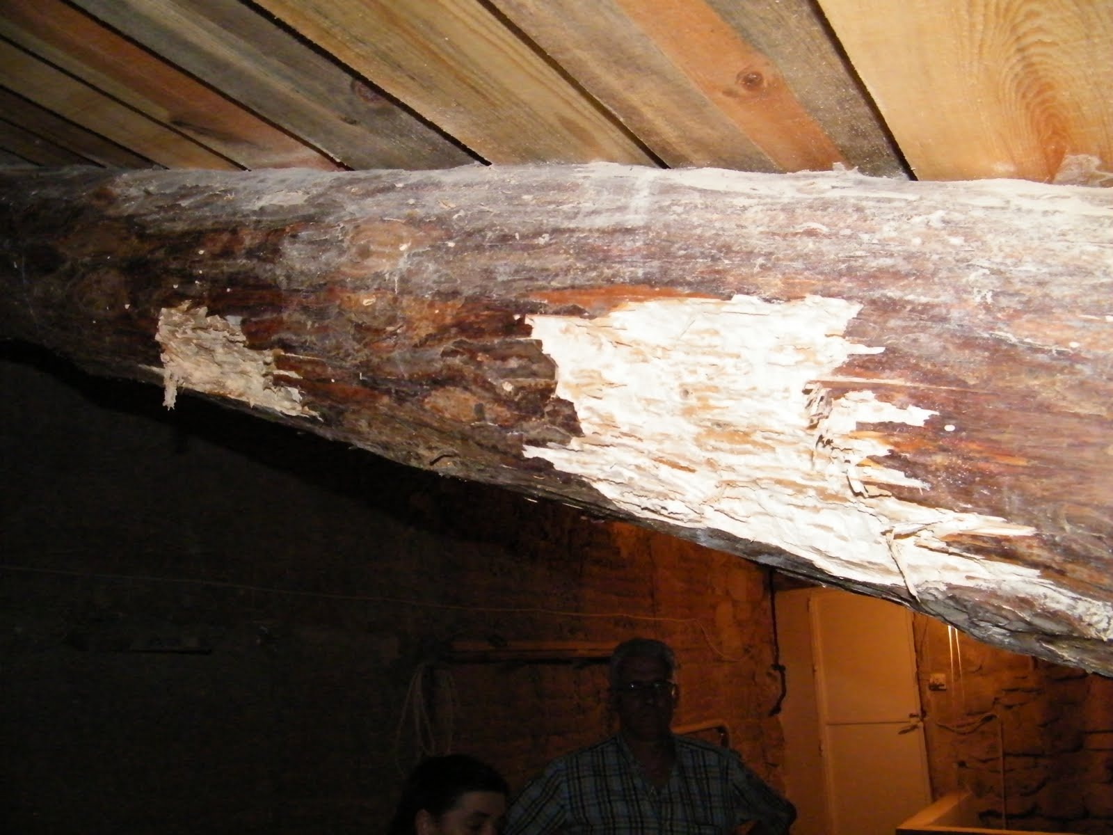 Chiquitilla del gavellar agosto 2010 - Vigas de madera huecas ...