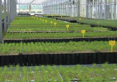 Construcci n del vivero preparaci n del terreno for Proyecto productivo de vivero forestal
