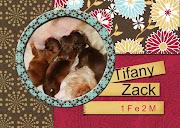 Ninhada Tifany e Zack.