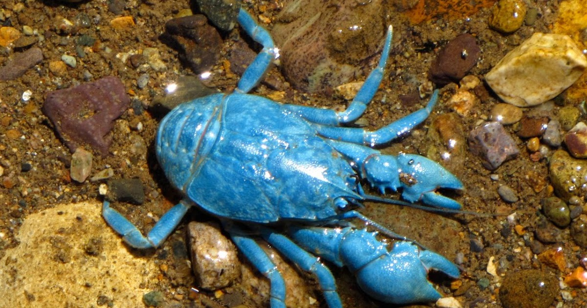 Crab  Wikipedia