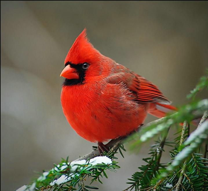 paigeu002639s posts memory of mama red bird 718x660