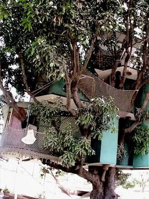 house on a mango tree pics