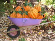 Purdy Pumpkins in Purple Wheelbarrow