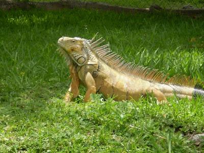 Animales y Animales » Animales Ovíparos - imagenes de animales oviparos