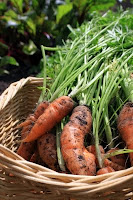 carrots vegetables