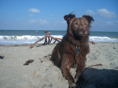 Molly@ the beach