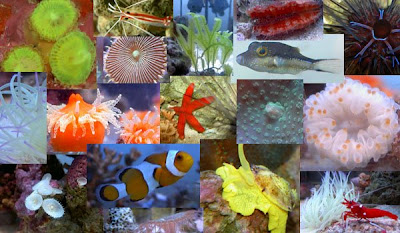 Saltwater Aquarium - Reef Tank