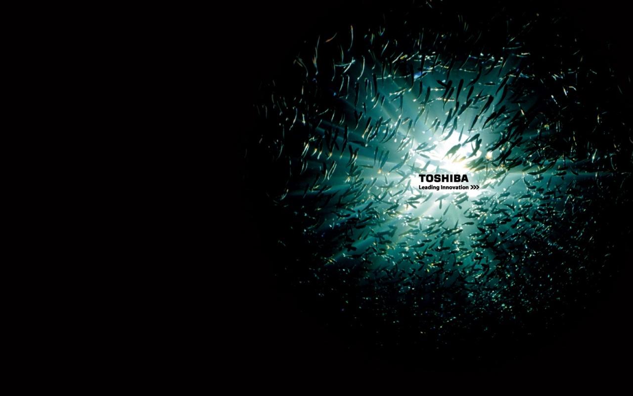http://4.bp.blogspot.com/_BFYlnQUsPgo/TN2MYzoU2hI/AAAAAAAAAkc/836U-TpAbjg/s1600/toshiba-ocean-fish-1280x800-wallpaper-462.jpg