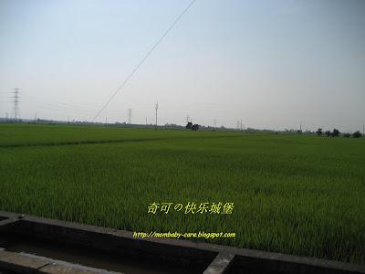 Kiko 适耕庄