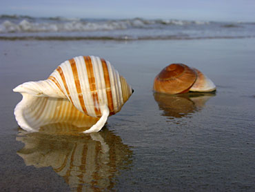 Each sea shell is specially designed- never to be repeated...