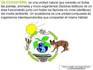 Ecosistema definición
