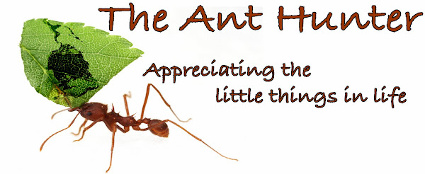 The Ant Hunter