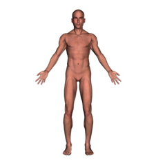 Picture Anatomical Position Human Body http://christianalcantara.blogspot.com/2010/11/all-saints-day-dilemma_1258.html