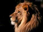 Venha o teu Reino