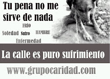 No al abandono de animales