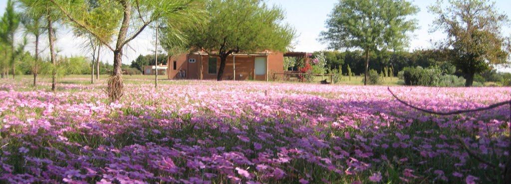 Campo de flores en abril/mayo
