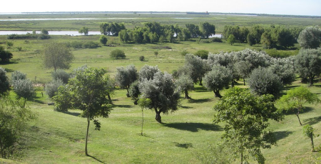 Vista desde Casuarinas