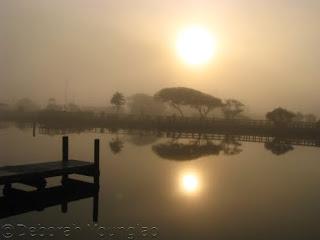 foggy Sound Park