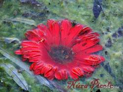 Flor Neptuno