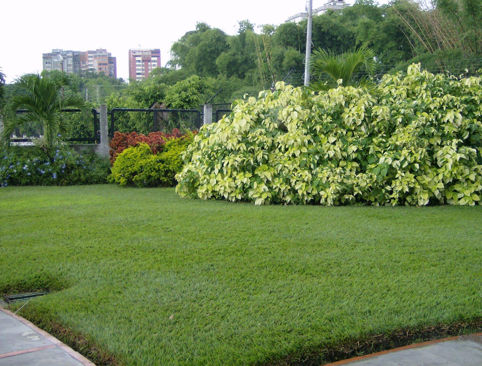 Jard n bamb c a jardines de la hermandad gallega de for Jardin bambu