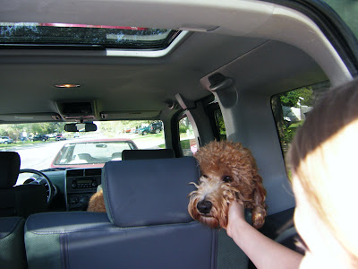 Dakota enjoys a last friendly pat as he waits in the car
