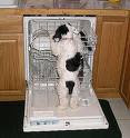 Dishwasher Repair and Troubleshooting Tips