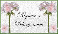 VELKOMMEN TIL RIGMOR'S PELARGONIUM