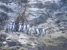 Pinguinos en el Desierto