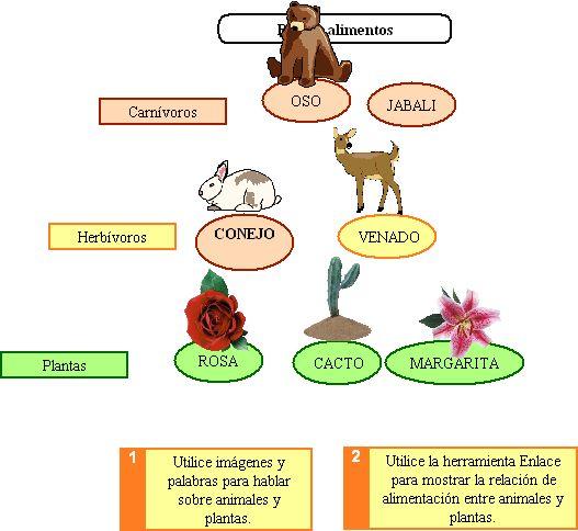 Cadenas alimenticias - Imagui