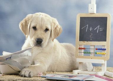 La strada insieme corsi di educazione per cani a napoli - Cane da colorare le pagine libero ...