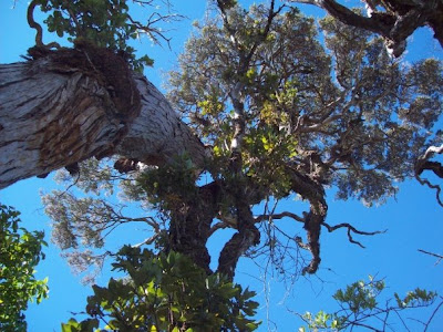 Pohon besar di pos 4