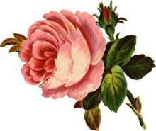 A Little Budding Rose
