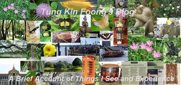 Tung Kin Foong's Blog