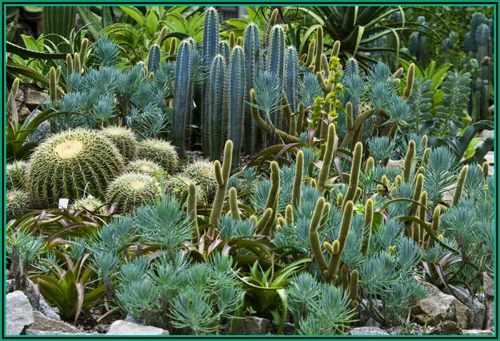 pedras para jardim aki : pedras para jardim aki:Jardim de cactus – Anjo Sonhador – XPG