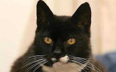 oldest-cat-birthday