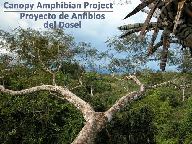 Canopy Amphibian Project