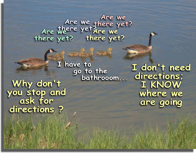 Geese Vacation