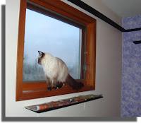 Tawnee on windowsill