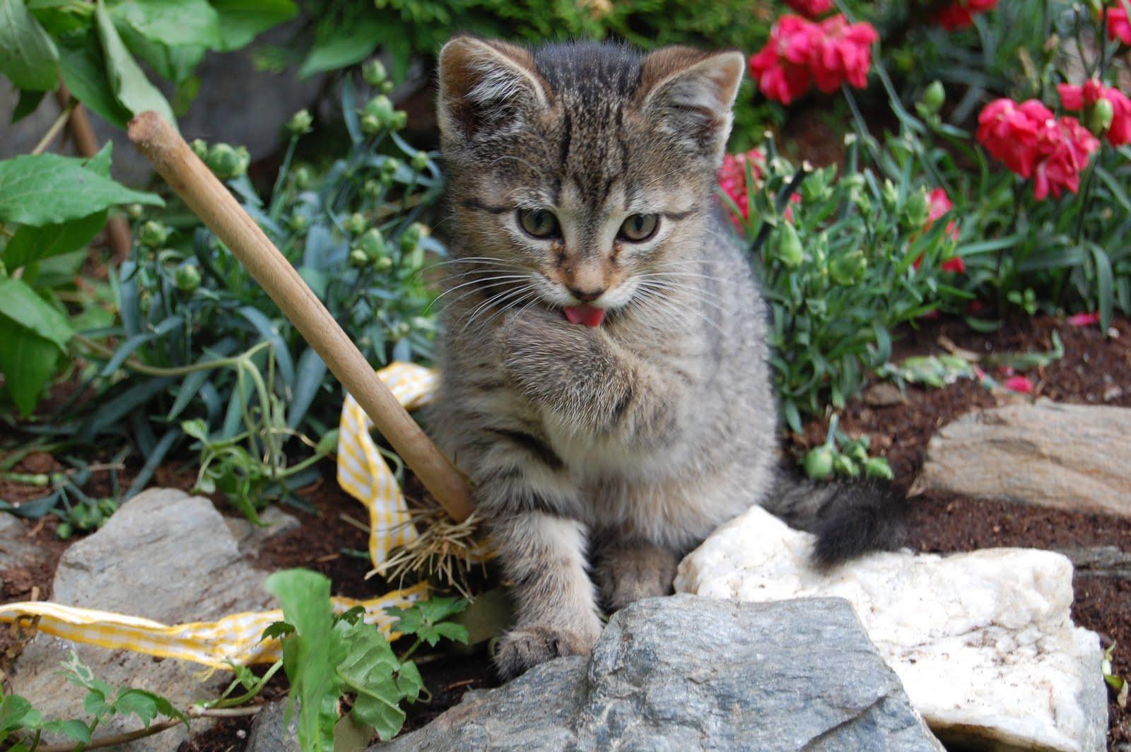 breilerhof news ein paar fotos von unseren s en katzen