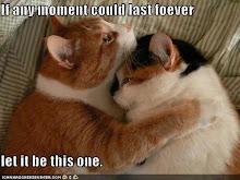cats hugging