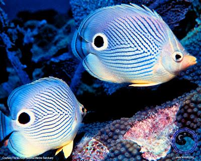 วิธีการเลี้ยงปลาทะเลสวยงาม การเลี้ยงปลาทะเลสวยงาม