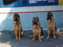 Diana e seus irmãos