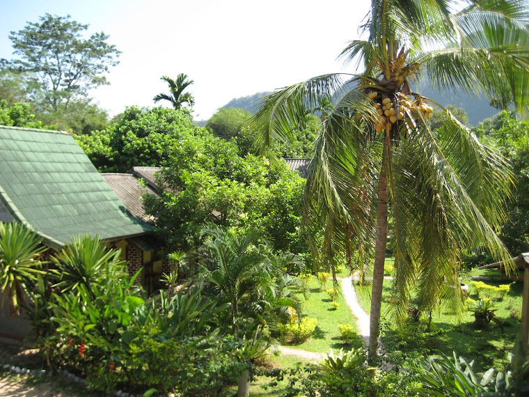 Our Guest house in Khao Sok