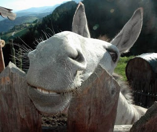 funny donkey ass photo smiling for the camera
