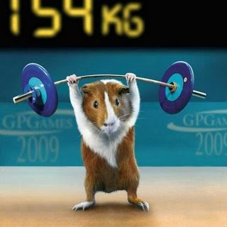 funny photos of animals hamster olympics weightlifting photo
